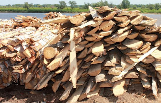 Переработка отходов лесопиления, классификация отходов и видов переработки